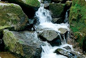 大朝の天然水